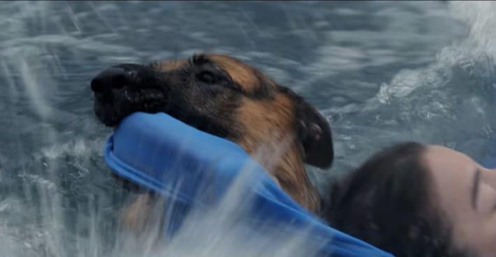 A Dogs Purpose Hercules