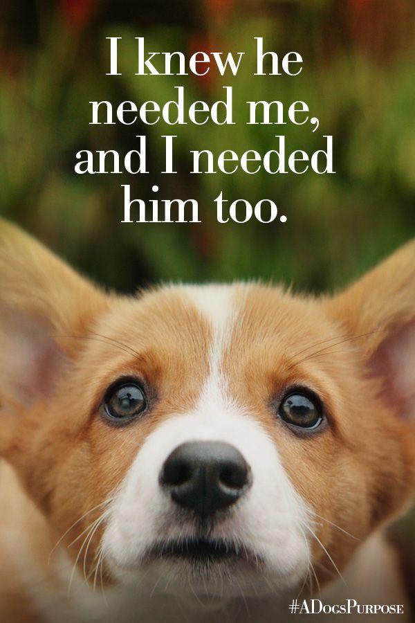 Corgi A Dogs Purpose